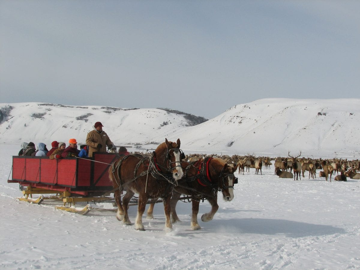 Horse-Drawn Sleigh Ride - New York Finger Lakes Winter Festivals & Events
