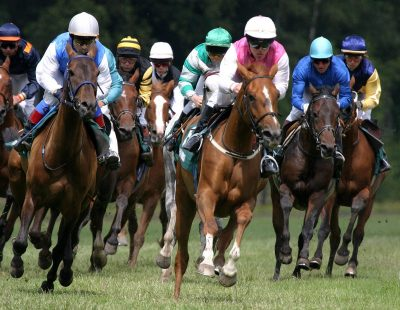 Must See New York Horse Racing Tracks and Horse Shows
