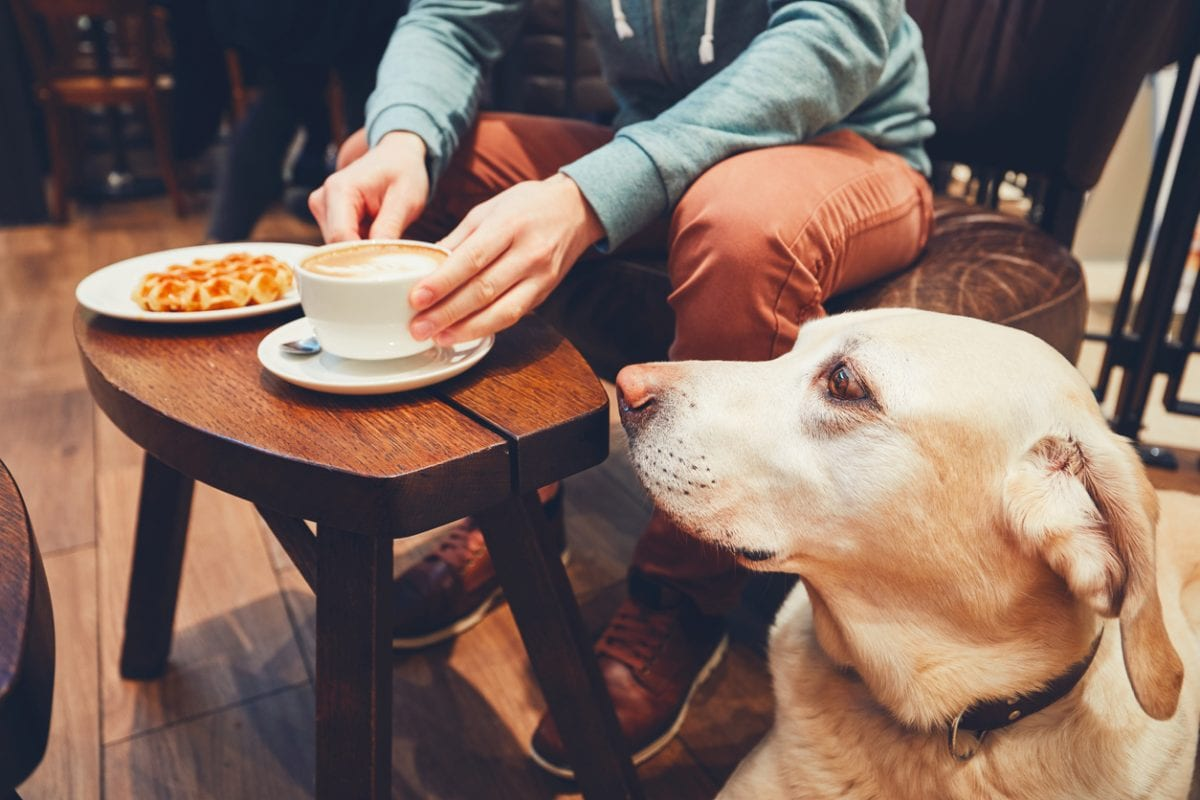 Dog friendly cafes New York City