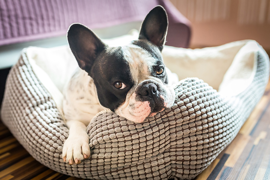 dog bed for dog friendly cabins catskills