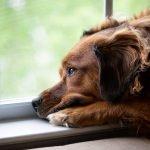 pet-friendly rentals in catskills