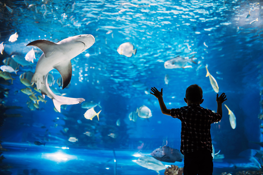 Free Things to Do In NYC on the Weekend - Visit the New York Aquarium